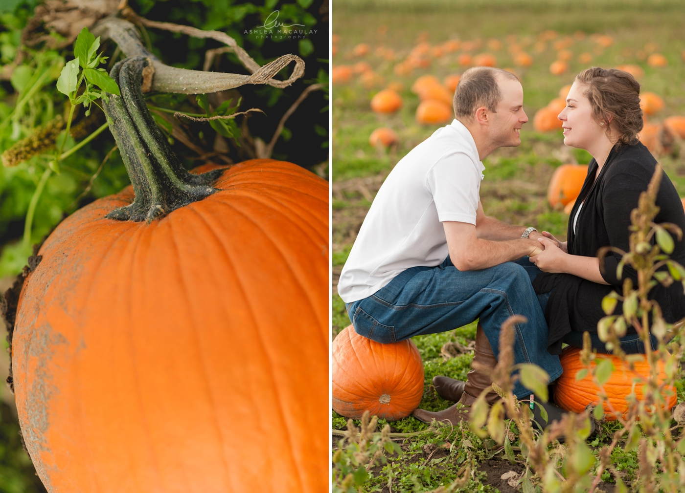 Courtice Pumpkin Farm Engagement
